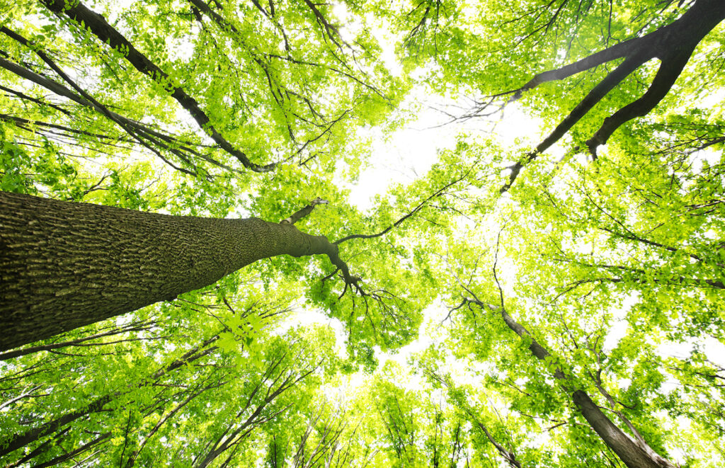 L'impresa come sistema vivente - Apoteca Natura