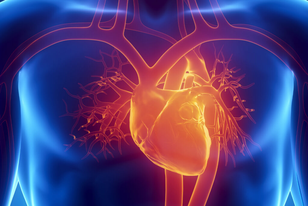 Cosa fare per proteggere la salute cardiovascolare su tutti i fronti - Apoteca Natura